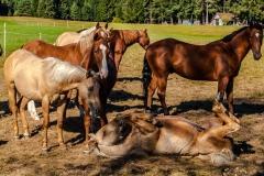 Pferde-4433